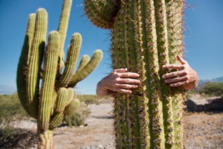 Image result for embrace cactus