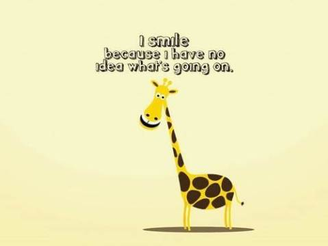 no idea giraffe